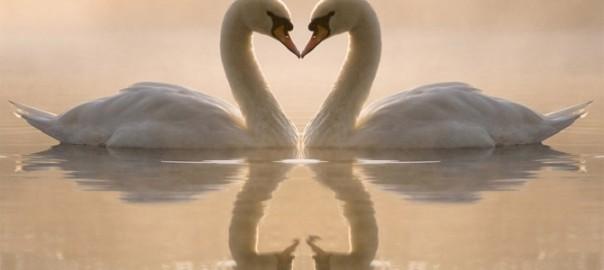 春は出会いの季節。アニマル界の恋愛事情16選
