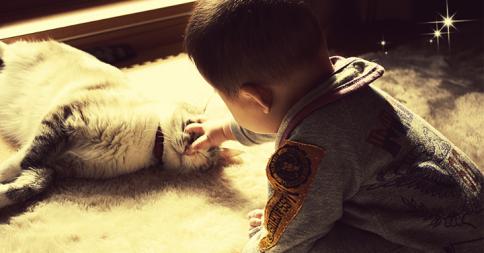 「ネコ vs 赤ちゃん」の戦いを収めたホームビデオがホンワカする