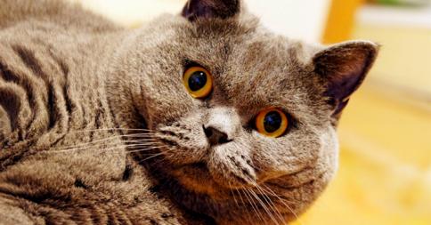 ぽっちゃりした猫、略してポチャ猫48