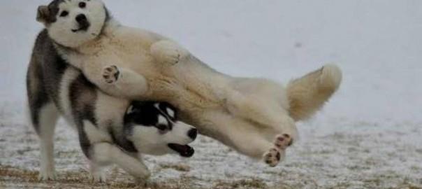 【画像で大喜利】犬の写真でボケてみた15選
