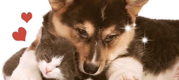 【最強の甘えん坊】犬のことが好きすぎる「猫」と男気溢れる「犬」