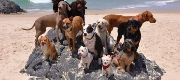 夏が待ち遠しくなる!犬12匹+猫がビーチで大はしゃぎ