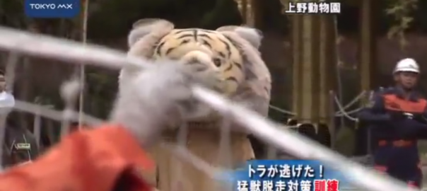 【緊張感ゼロ】上野動物園の猛獣捕縛訓練がユルすぎて癒されると海外で話題