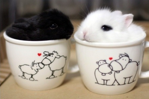 bunnies-620x