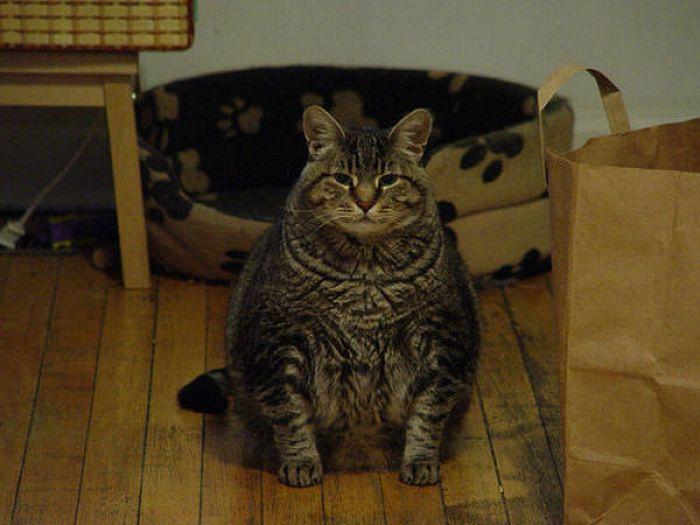 fat_cats_02