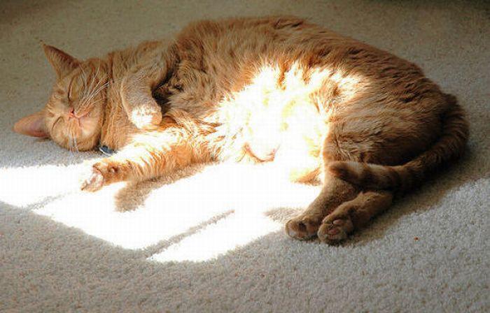 fat_cats_26