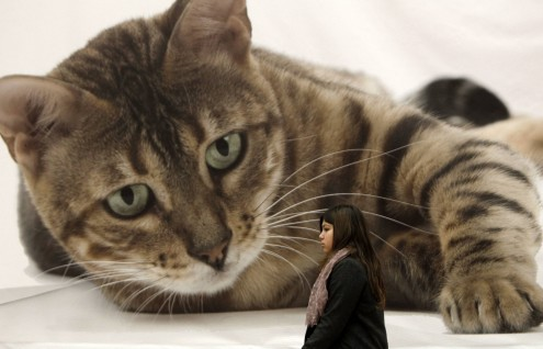 photo-caption-contest-giant-cat-495x318