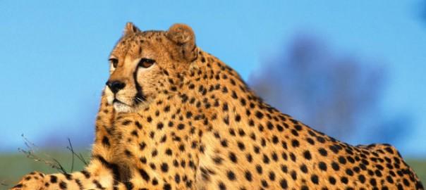 【新事実】動物から「首をなくなる」と可愛さが倍増する不思議17選