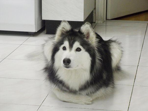 前足を抱える犬