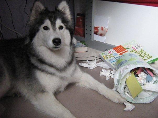 帽子を被った犬