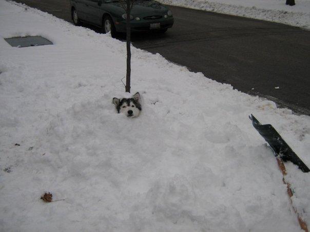 雪に埋もれる犬2