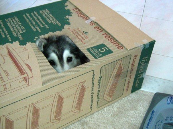 箱の中から覗く犬1