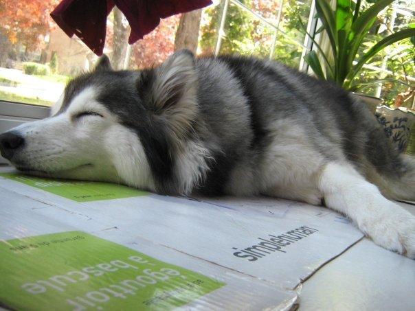 寝そべる犬2