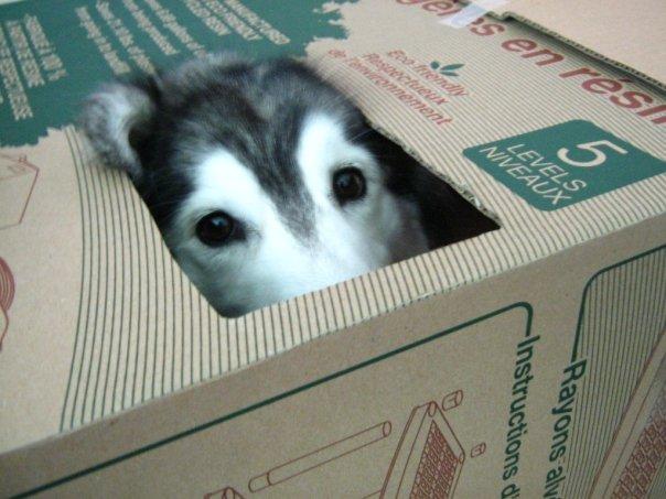 箱の中から覗く犬2