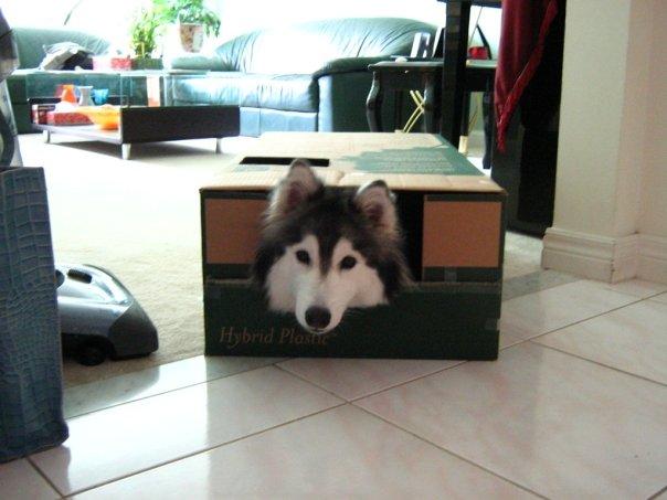 箱の中から顔を出す犬