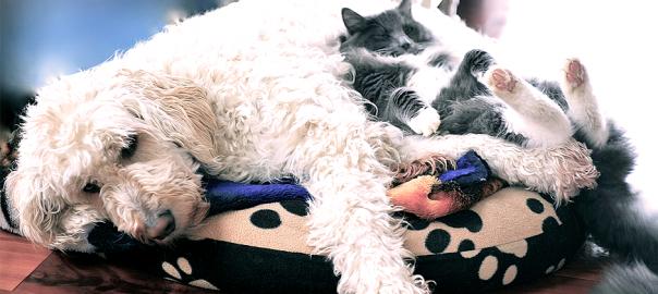 一緒に暮らすとなぜか起こる「犬の寝床が猫に奪われる」現象28選