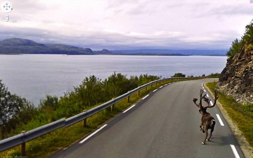 堂々と道を歩く鹿