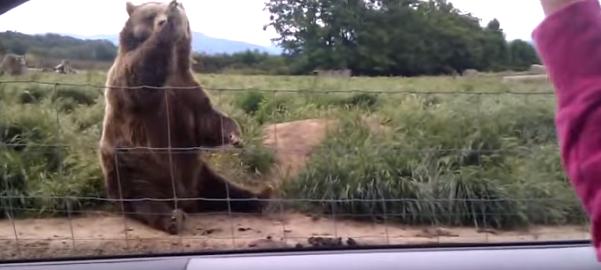【ノリノリ】挨拶を全力で返してくれるクマさん