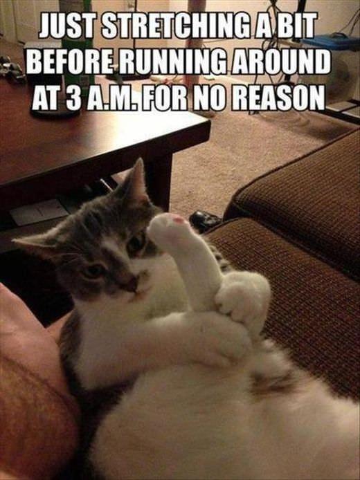 ストレッチ中の猫