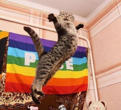 飛んでいる猫