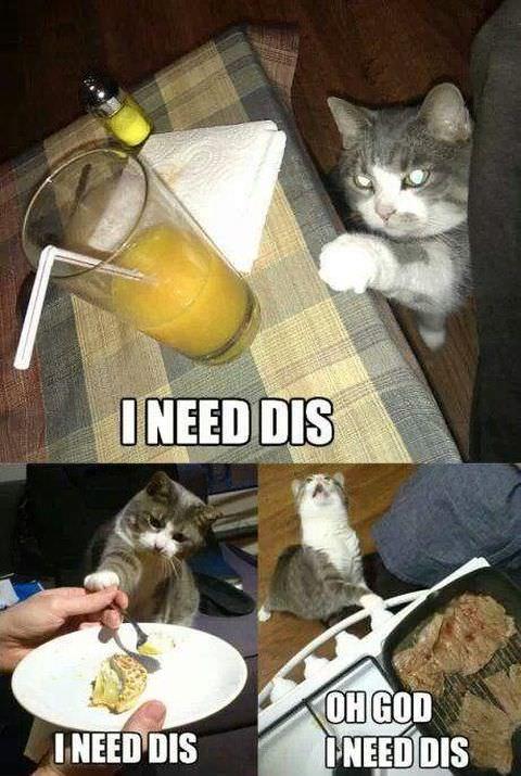 食べ物を盗む猫