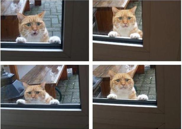 中をのぞく猫