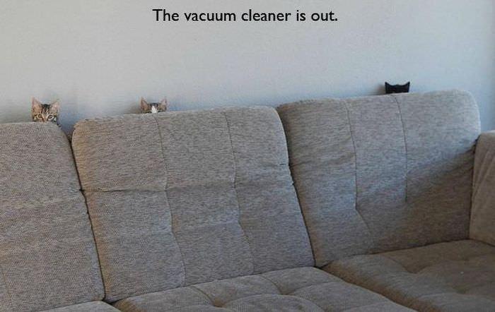 掃除機が嫌いな猫