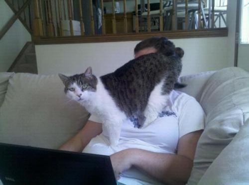 膝に座ろうとする猫