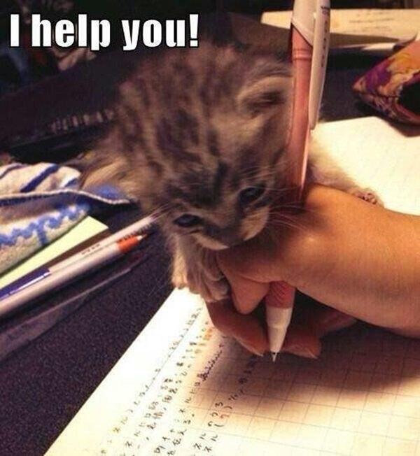 勉強を手伝う猫