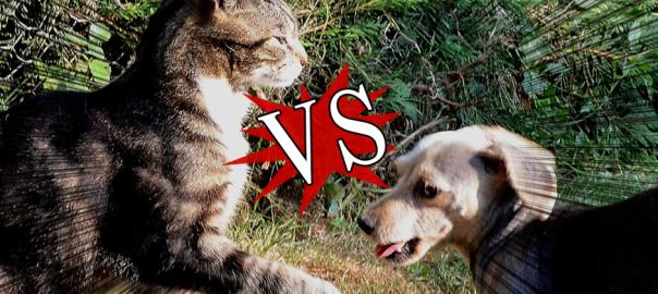 勝つのはどっち!?戦闘中の猫と犬8選