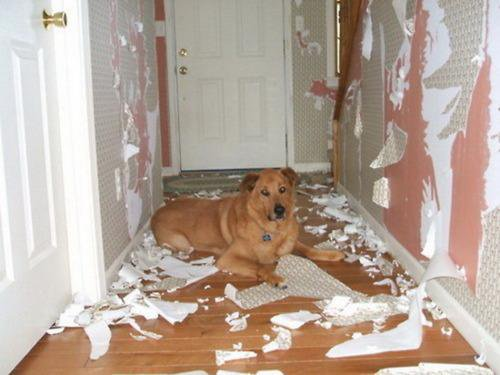 犬「家宅捜査を開始します。」→その後