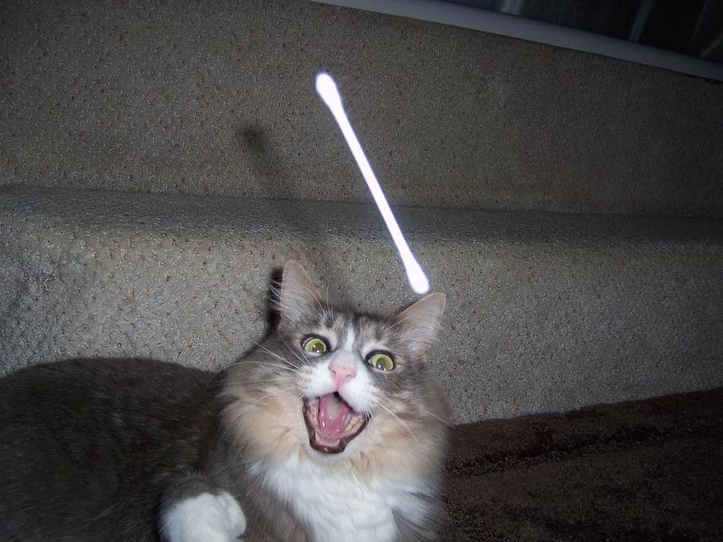 ネコと綿棒4