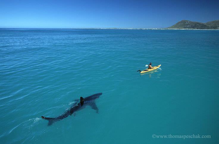 サメに追われる人