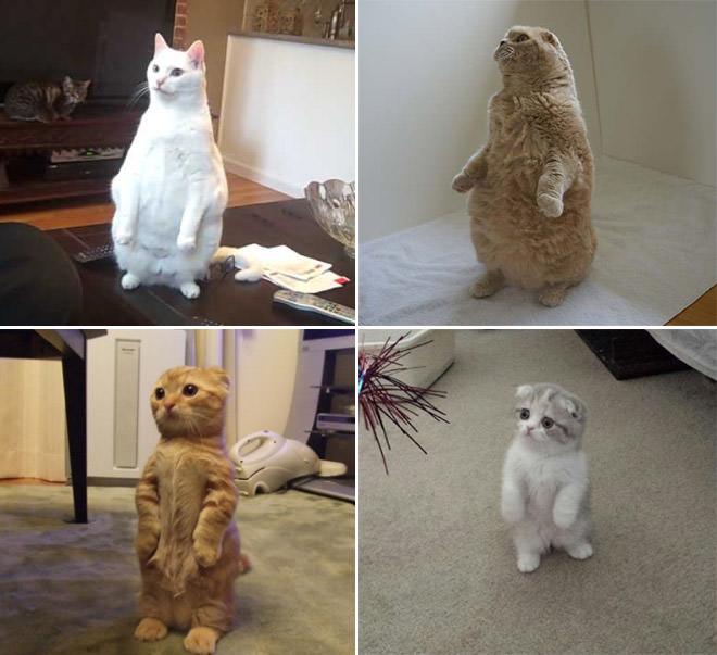 可愛い立つ猫達