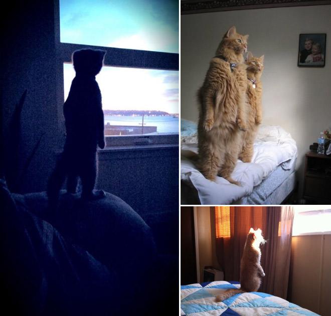 遠くを見つめる二本足で立つ猫