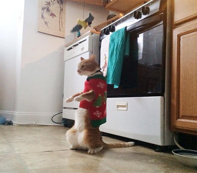 キッチンで立ち上がった猫