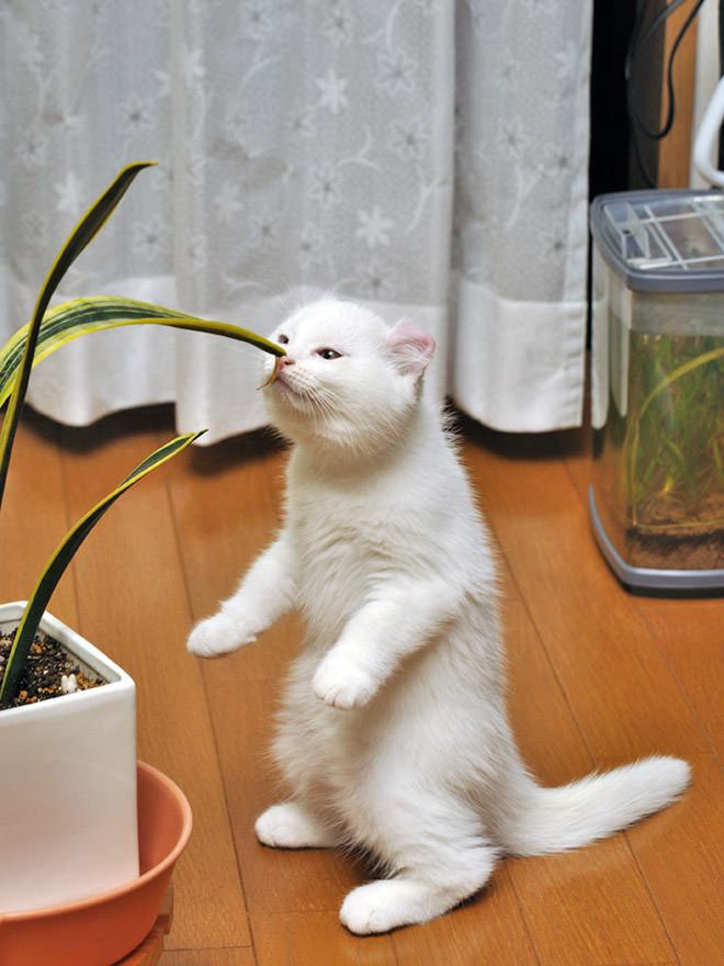 植物を嗅ぐために立ち上がった猫
