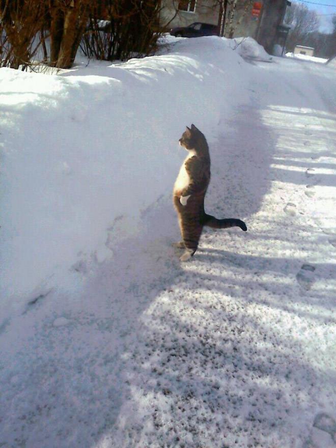 雪の上で立つ猫