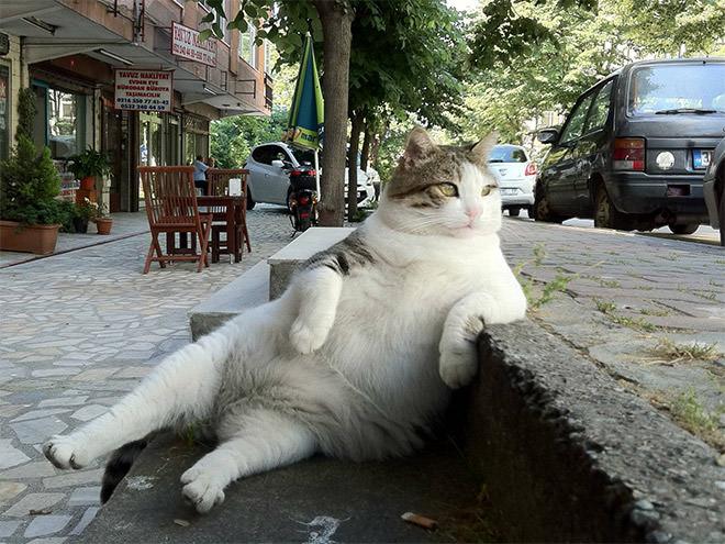 貫禄のある変なポーズの猫