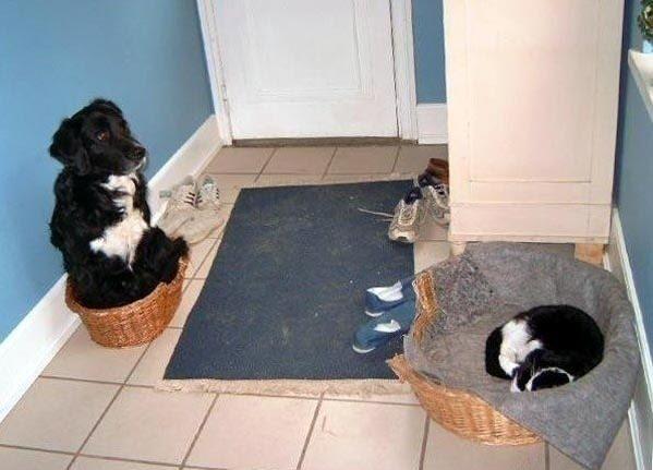 dog-beds1