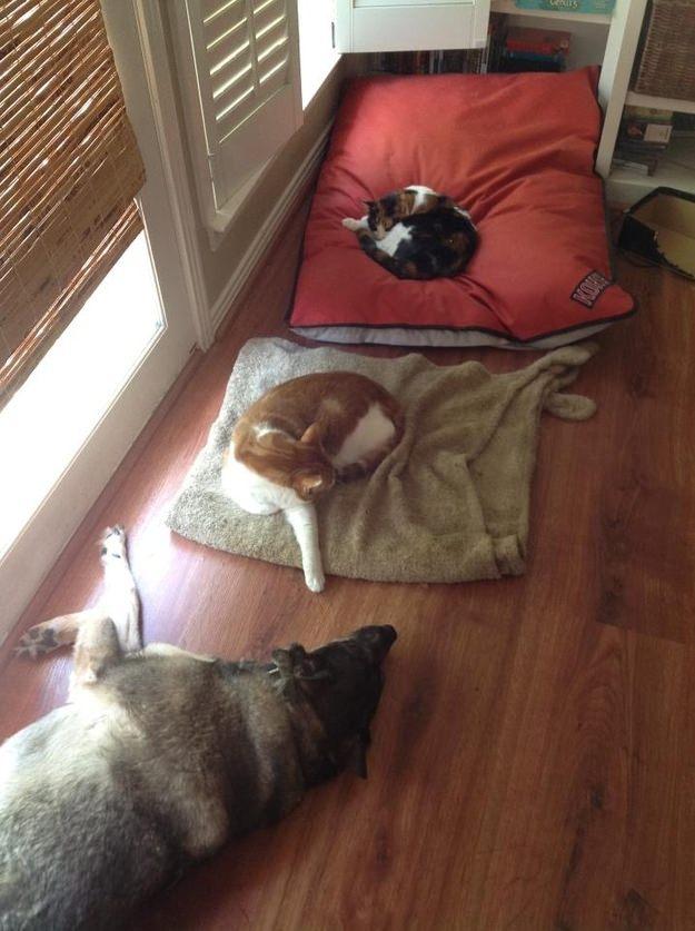 dog-beds6