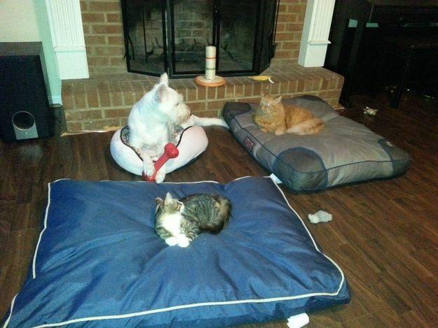 dog-beds8