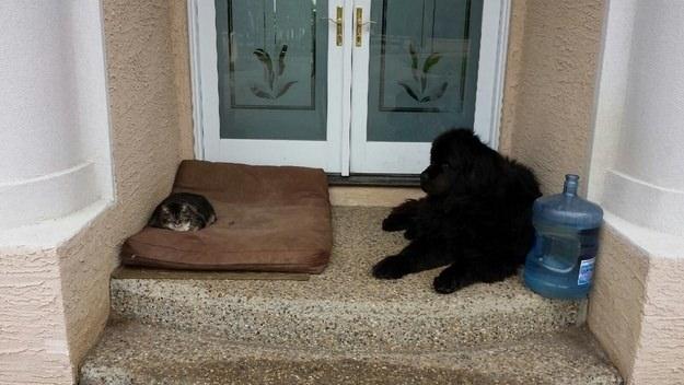dog-beds10