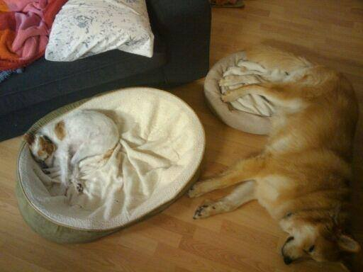 dog-beds15