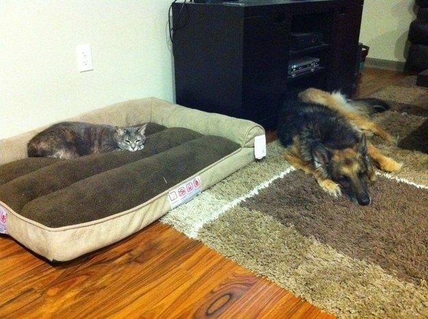 dog-beds19