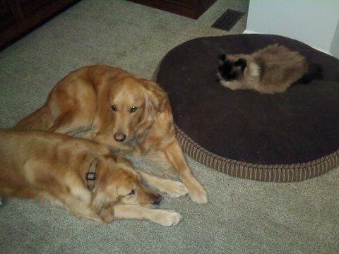 dog-beds22