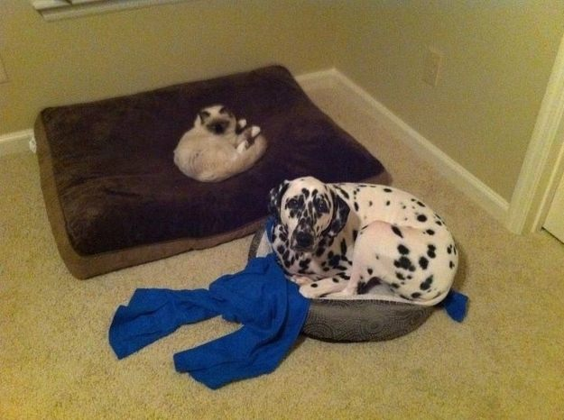 dog-beds24