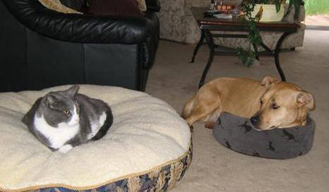 dog-beds26