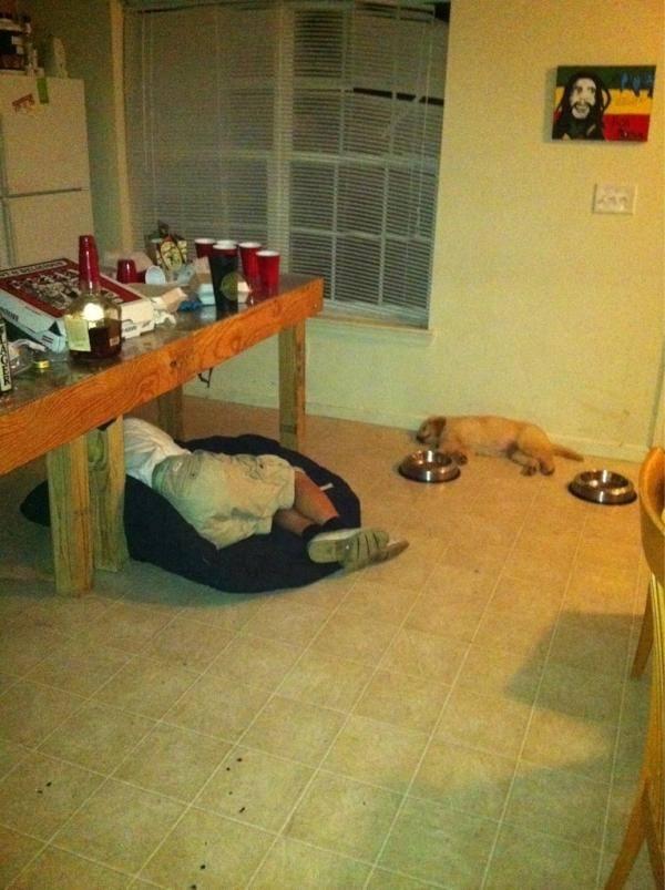 dog-beds29