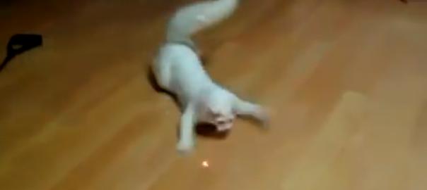 【本能を呼び覚ます】ネコ vs レーザーポインター